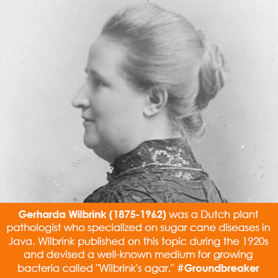 "Gerharda Wilbrink (1875-1962) was a Dutch plant pathologist who specialized on sugar cane diseases in Java. Wilbrink published on this topic during 1920s and devised a well-known medium for growing bacteria called ""Wilbrink's agar."""
