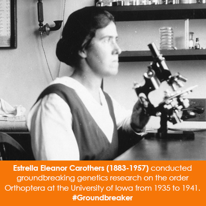 Estrella Eleanor Carothers (1883-1957) conducted groundbreaking genetics research on the order Ortho