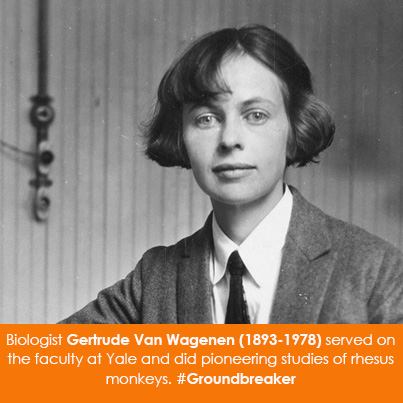 Biologist Gertrude Van Wagenen (1893-1978) served on the faculty at Yale and did pioneering studies