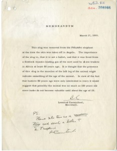 Memorandum from Smithsonian Institution Secretary, Leonard Carmichael regarding the importance of a metal slug found in the Fénykövi Elephant, March 17, 1959, Manuscript, Smithsonian Institution Archives, Record Unit 305, Box 1102, Accession 208986.