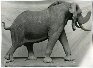 Miniature model of Fénykövi elephant done by Norman N. Deaton, c. 1957, Black-and-white print,