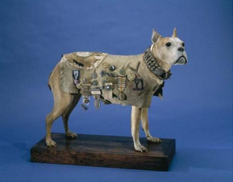 Stubby, Stuffed dog, blanket adorned with medals, National Museum of American History, Credit: Armed Forces History, Division of History of Technology, Catalog #: 58.280M, Accession #: 210736.