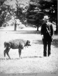 William Temple Hornaday and bison calf