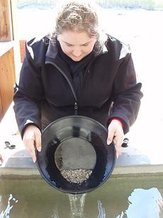 Gold panning in the Klondike Gold Fields near Skagway, Alaska.  Courtesy of Kimberly Cherrix, May 17, 2012.