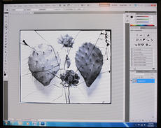 Digitization of a glass plate negative, during Treatment, 2012, by Janelle Batkin, Record Unit 7370,
