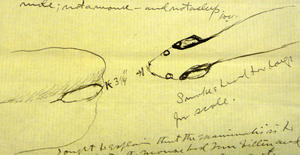 David Whites illustration of mouse, Smithsonian Institution Archives, Record Unit 305, Accession Number 41108.