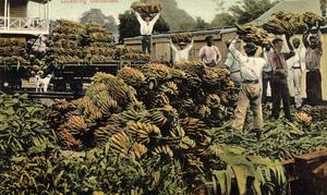 United Fruit Company employees loading bananas to be shipped to markets in the United States. Postcard from Doug Allen's collection.