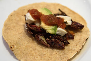 Tacos de Chapulines [Grasshopper Tacos], by William Neuheisel.