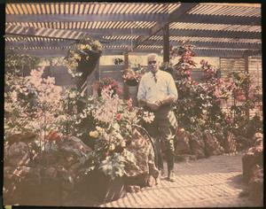 Rosecroft Begonia Gardens, 1920, by Alfred D. Robinson, glass autochrome, Garden Club of America Collection, Archives of American Gardens.