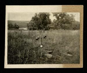 Photograph taken by Bohumil Shimek during field work in Europe, 1914, of Sand-puszta, Island of Czepel. Stipa Graeffiana, Linum pannoncum, etc. Smithsonian Institution Archives, Record Unit 7082.