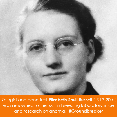Biologist and geneticist Elizabeth Shull Russell (1913-2001)