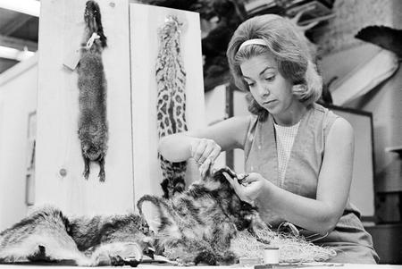 Taxidermist Sybil Costanza prepares a specimen in the taxidermy lab.