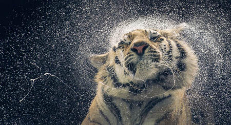 More Than Human, Tim Flach.