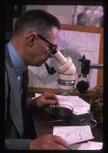 Dr. Fenner Chace, March 1975, by Kjell Sandved, color transparencies, Smithsonian Institution Archives, Accession Number 95-013, Negative Number SIA2013-03876.