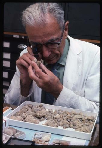 G. Arthur Cooper, 1975, by Kjell Sandved, color transparencies, Smithsonian Institution Archives, Accession Number 95-013, Negative Number SIA2013-03893.