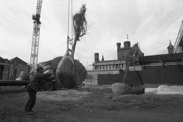 One of the first eight trees (lindens and magnolias) for the Enid Haupt Garden at the Quadrangle site being unloaded by crane on November 20, 1985., by Eric Long, black-and-white photographic print, Record Unit 371 - Office of Public Affairs, The Torch, 1955-1960, 1965-1988, Smithsonian Institution Archives, Neg. no. 85-17668-8A.