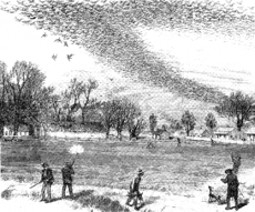 "Shooting a passenger pigeon flock; July 3, 1875; published in ""The Illustrated Shooting and Dramatic"