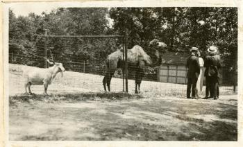 Camel and goat at the National Zoo,  Hippo, by Martin A. Gruber, c. 1920-1924, Record Unit 7355 - Martin A. Gruber Photograph Collection, 1919-1924, Smithsonian Institution Archives, neg. no. SIA2010-2324.