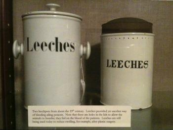 Leech jars, as seen at the New York Academy of Medicine. Courtesy of Nora Lockshin. (CC BY-NC-SA 2.0)