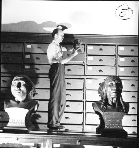 T. Dale Stewart Examining Skull, 1950, Record Unit 9521, Smithsonian Institution Archives, neg. no.