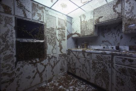 Cockroach Kitchen, Dynamics of Evolution Hall, 1979, photographic print, Accession 13-125 - National