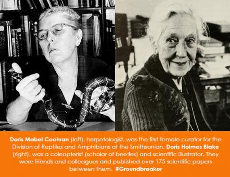 Doris Mabel Cochran (left), herpetologist, was the first female curator for the Division of Reptiles