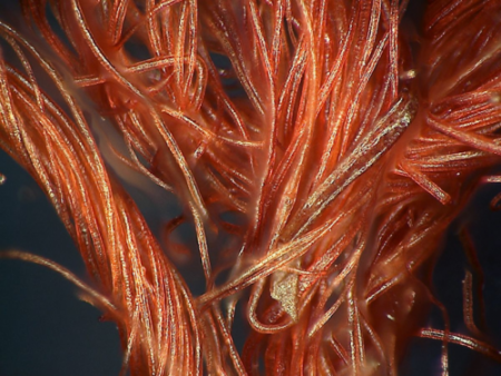 A microscopic look at individual fibers from the Star-Spangled Banner.