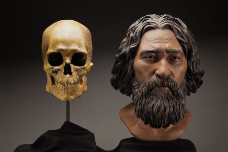 This clay facial reconstruction of Kennewick Man was carefully sculpted around the morphological fea