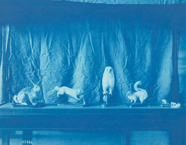 View of Taxidermic Animals Installation c. 1906, by Thomas Smillie, SIA RU000095 [25242].