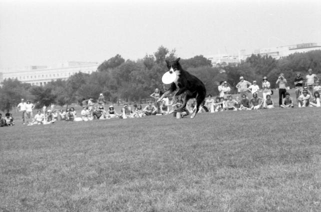 2nd annual Frisbee Festival at the Washington Monument, September 3, 1978, by Lee Stalsworth, Accession 11-009, Smithsonian Photographic Services, Photographic Collection, 1971-2006, Smithsonian Institution Archives, neg. no. 78-13940-20A.