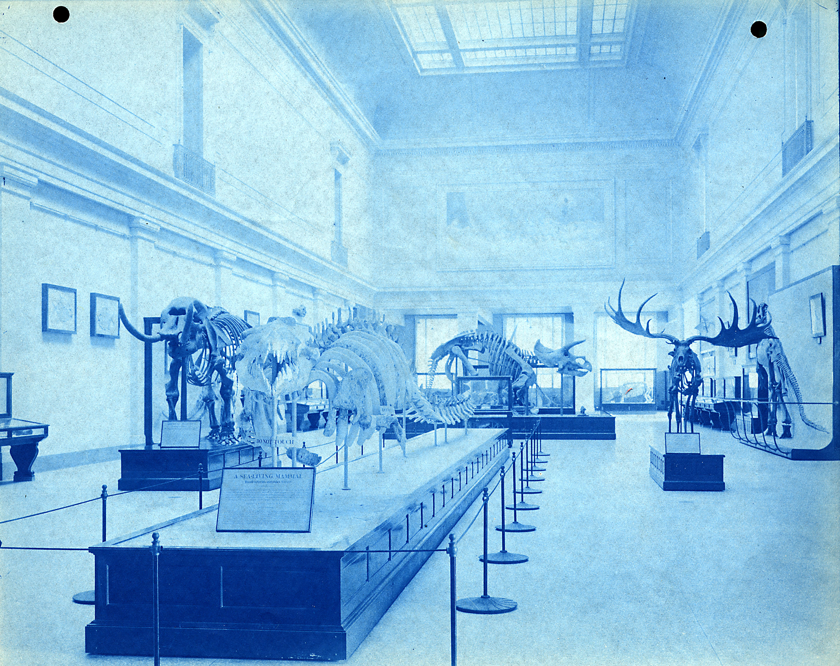 Blue-tinted image of animals on display.