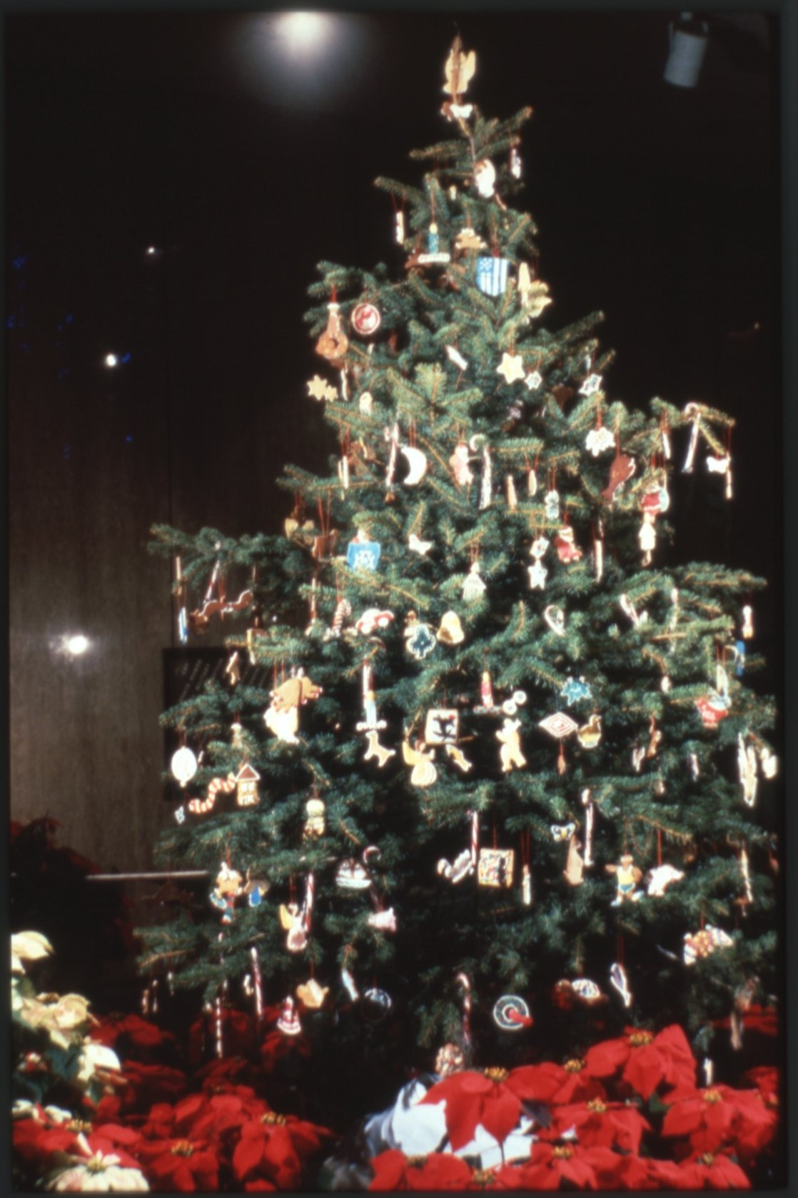 Cookie Tree, 1980. Smithsonian Institution Archives, Accession 11-009: Smithsonian Photographic Serv