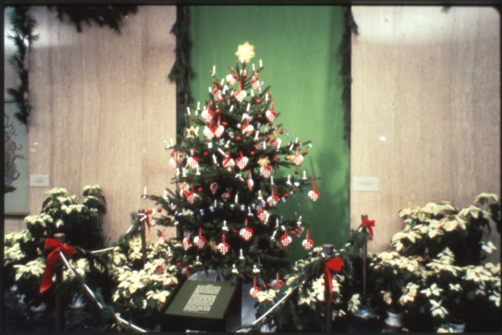 Swedish Tree, 1980. Smithsonian Institution Archives, Accession 11-009: Smithsonian Photographic Ser