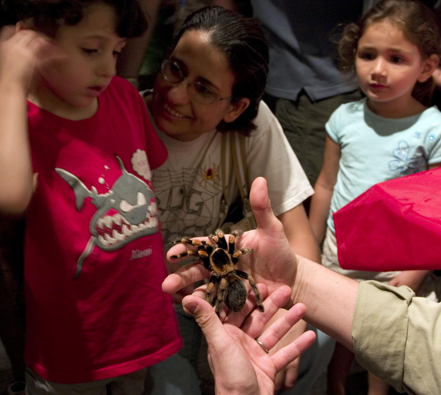 A boy appears cautious while someone is holding a tarantula near him.