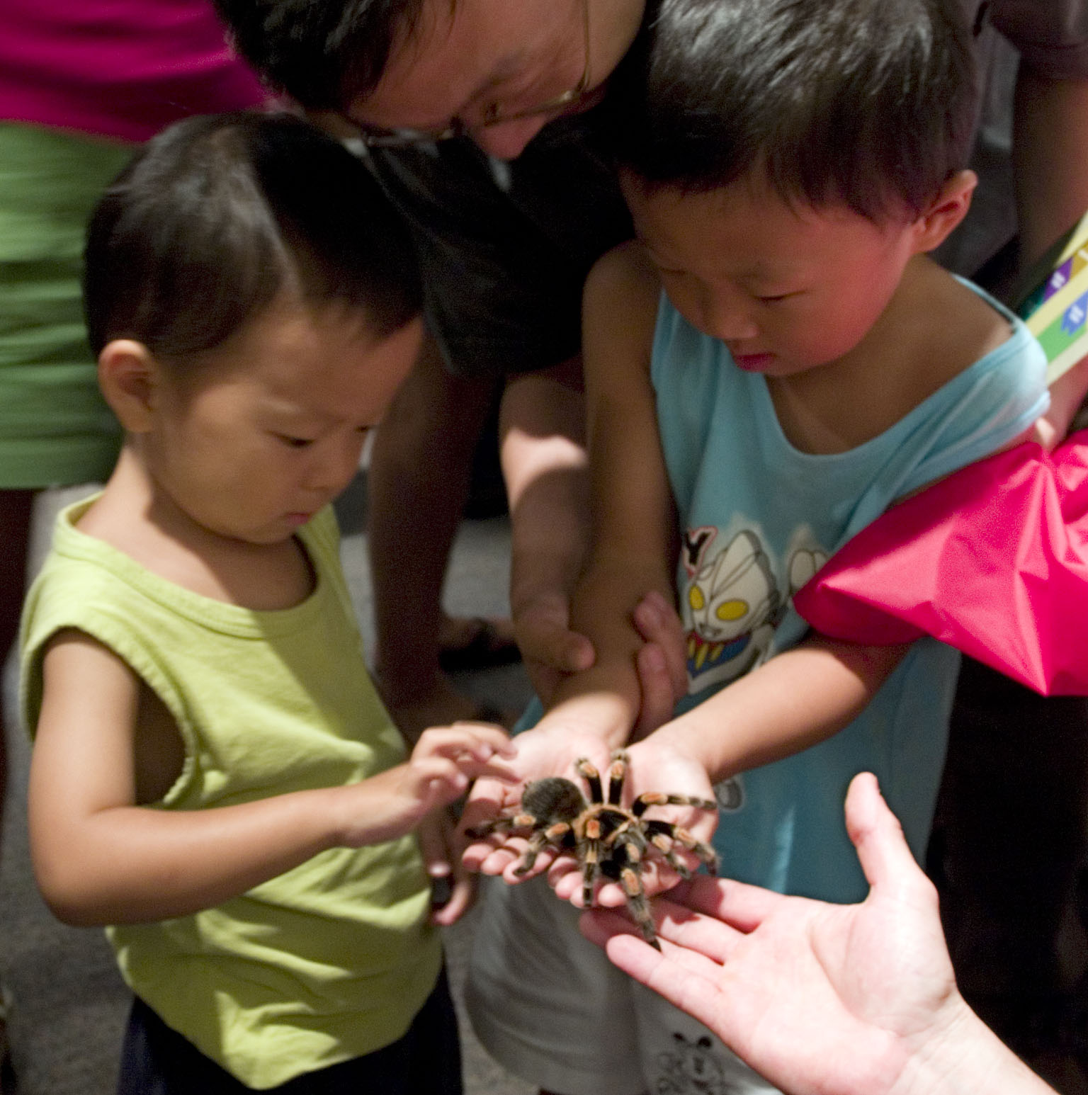 Two children hold and pet a tarantula.