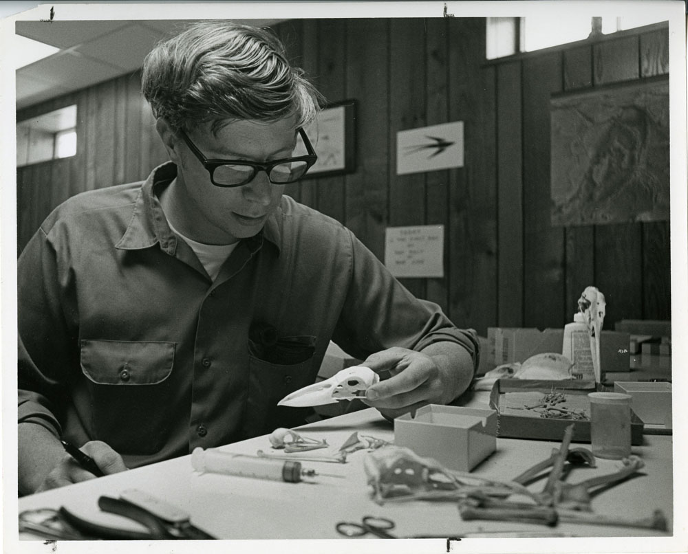 Storrs Olson, ornithologist and resident manager of the Chesapeake Bay Center for Environmental Studies, now the SERC, studies a bird skull in the headquarters' building.  Smithsonian Institution Archives, Record Unit 371, Box 1, Folder June 1969.
