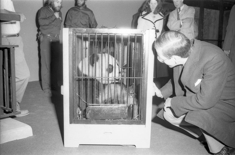Giant pandas Hsing-Hsing and Ling-Ling arrive in cages at National Zoo. SIA Acc. 11-009 [72-4674-13].