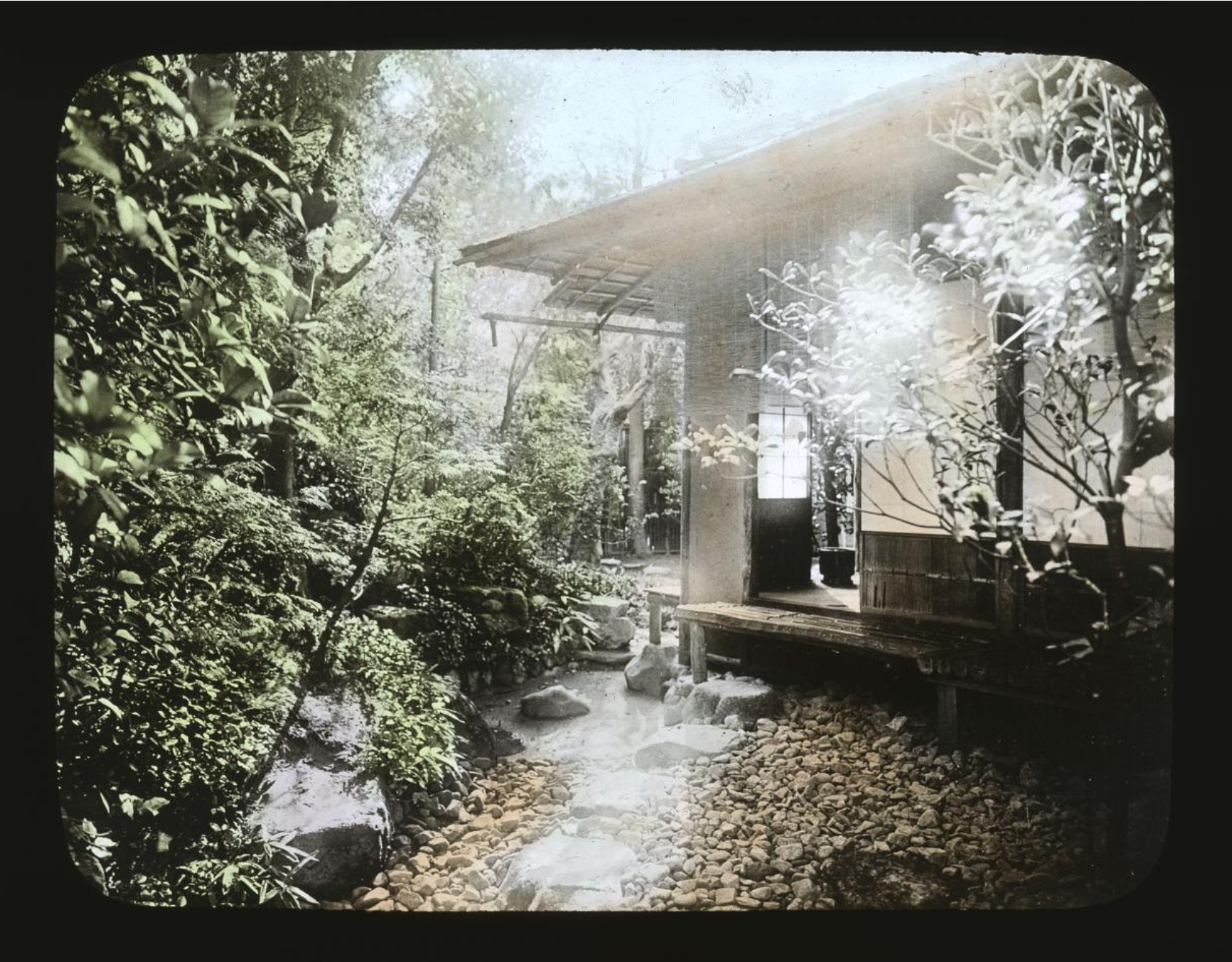 View of an outdoor garden with sunlight manipulating the camera. There is also a view of a building