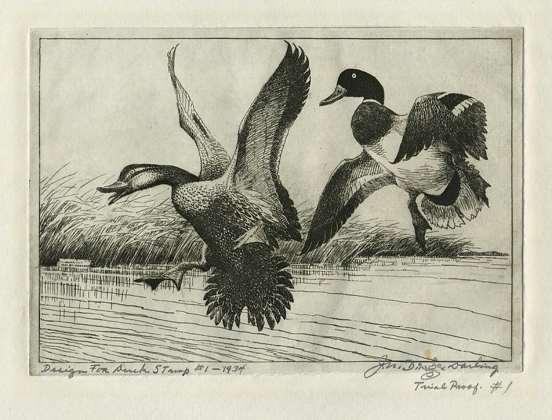Design for a stamp featuring two ducks flying over a lake. There is a signature on the bottom left a