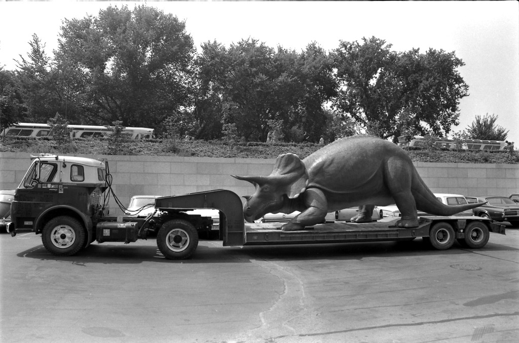 A large triceratops model on a flatbed truck. A man is also standing on the back of a truck.