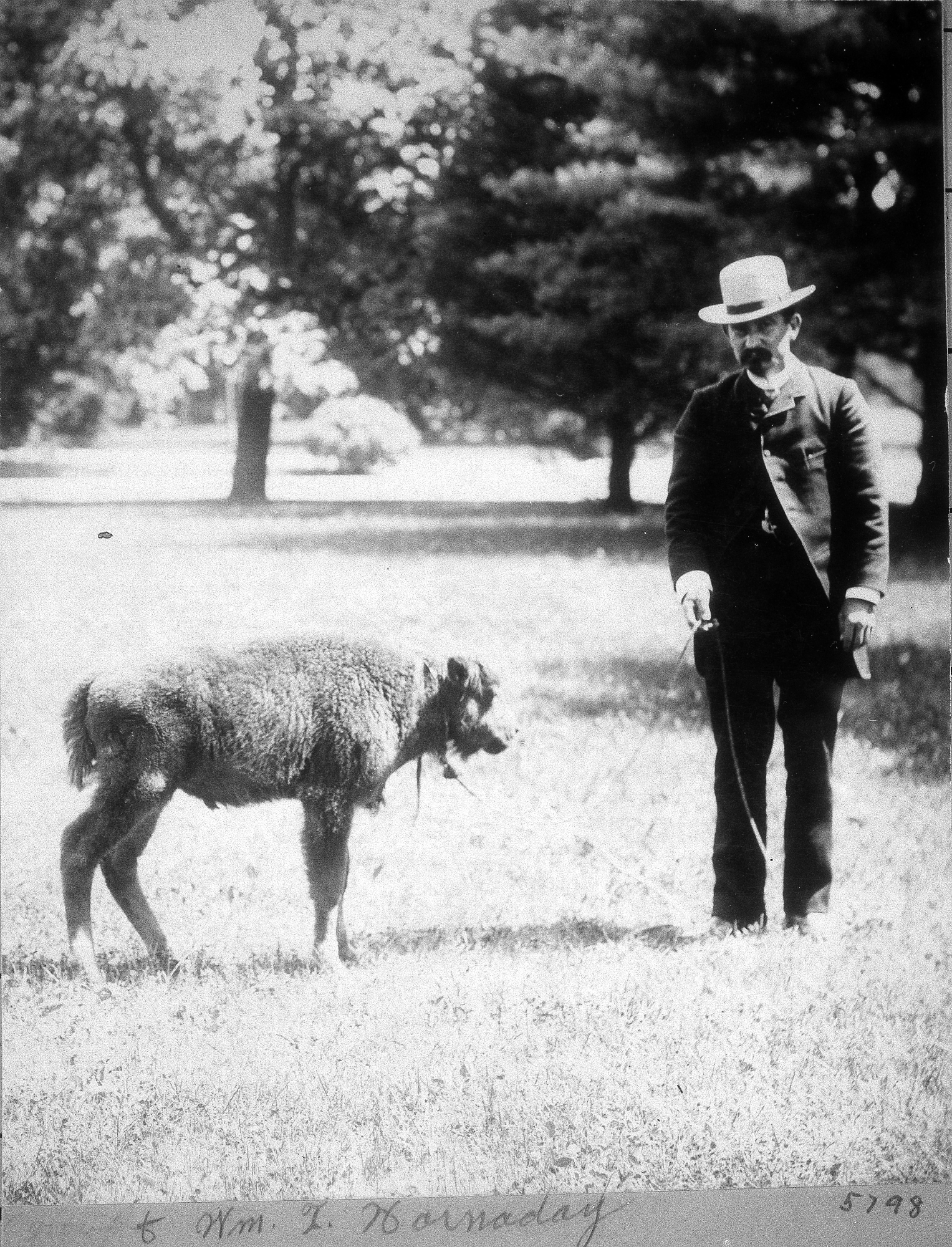 William Temple Hornaday with a baby bison known as Sandy, 1886.