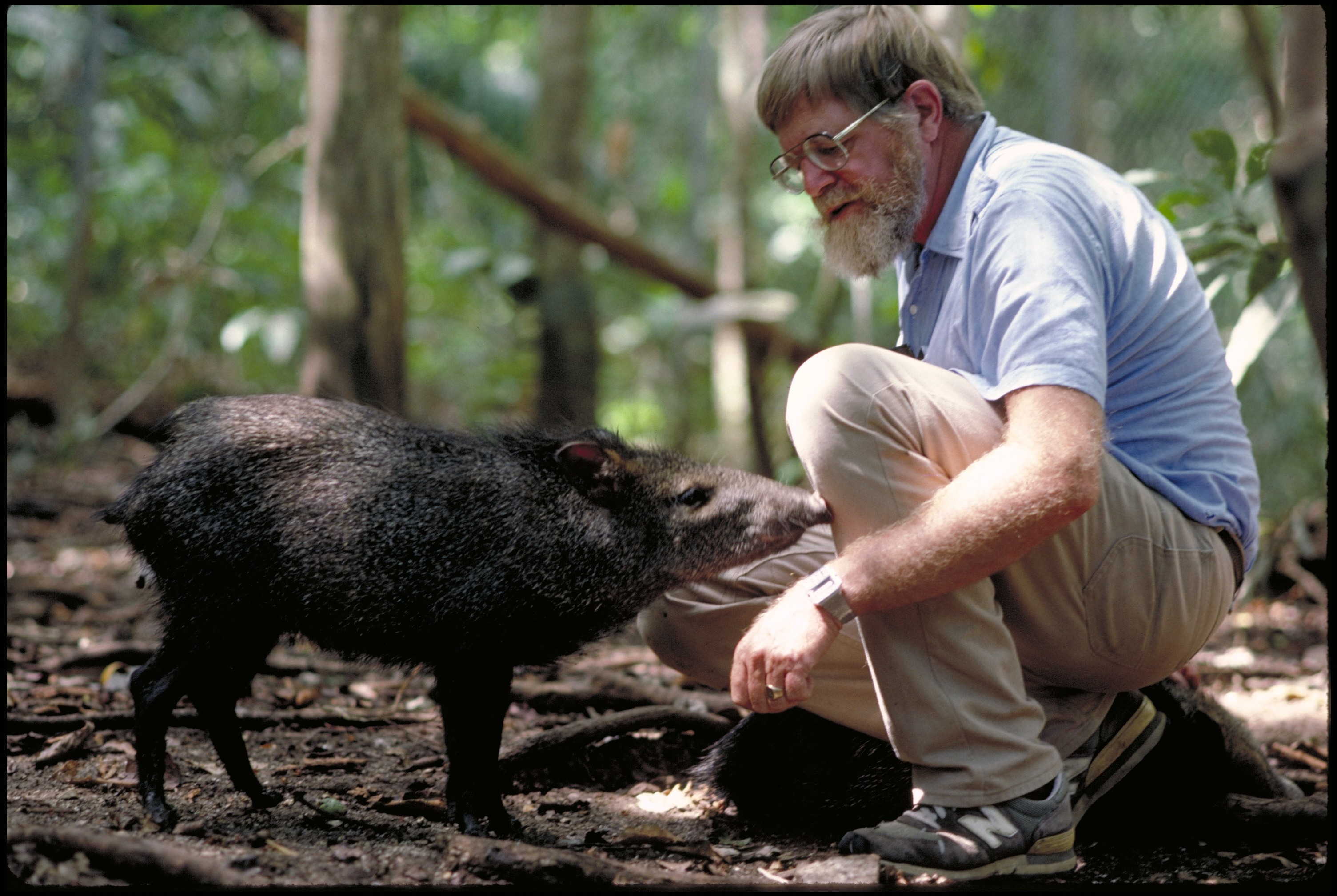 A man kneels down toward Peccary which looks sort of like a small hog.