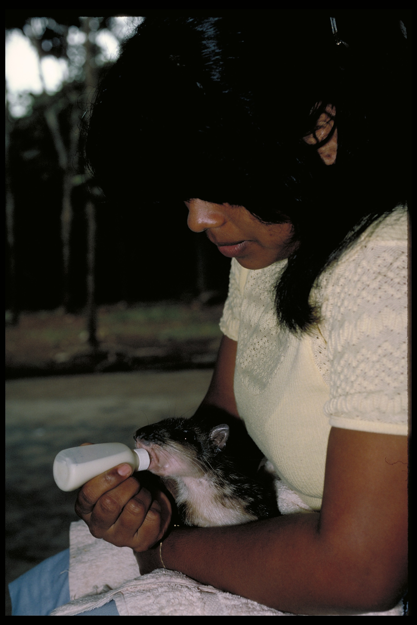 Woman bottle feeding pacas, Smithsonian Tropical Research Institute Paca Project, March 1987.