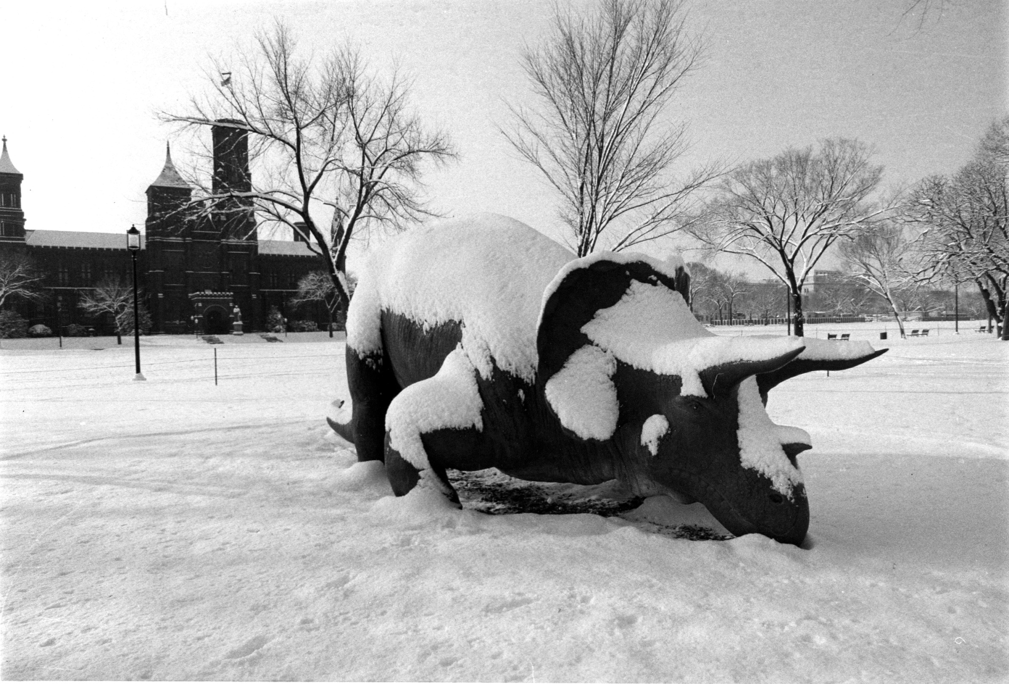 The Smithsonian's dinosaur statute Uncle Beazley covered in snow, 1977.