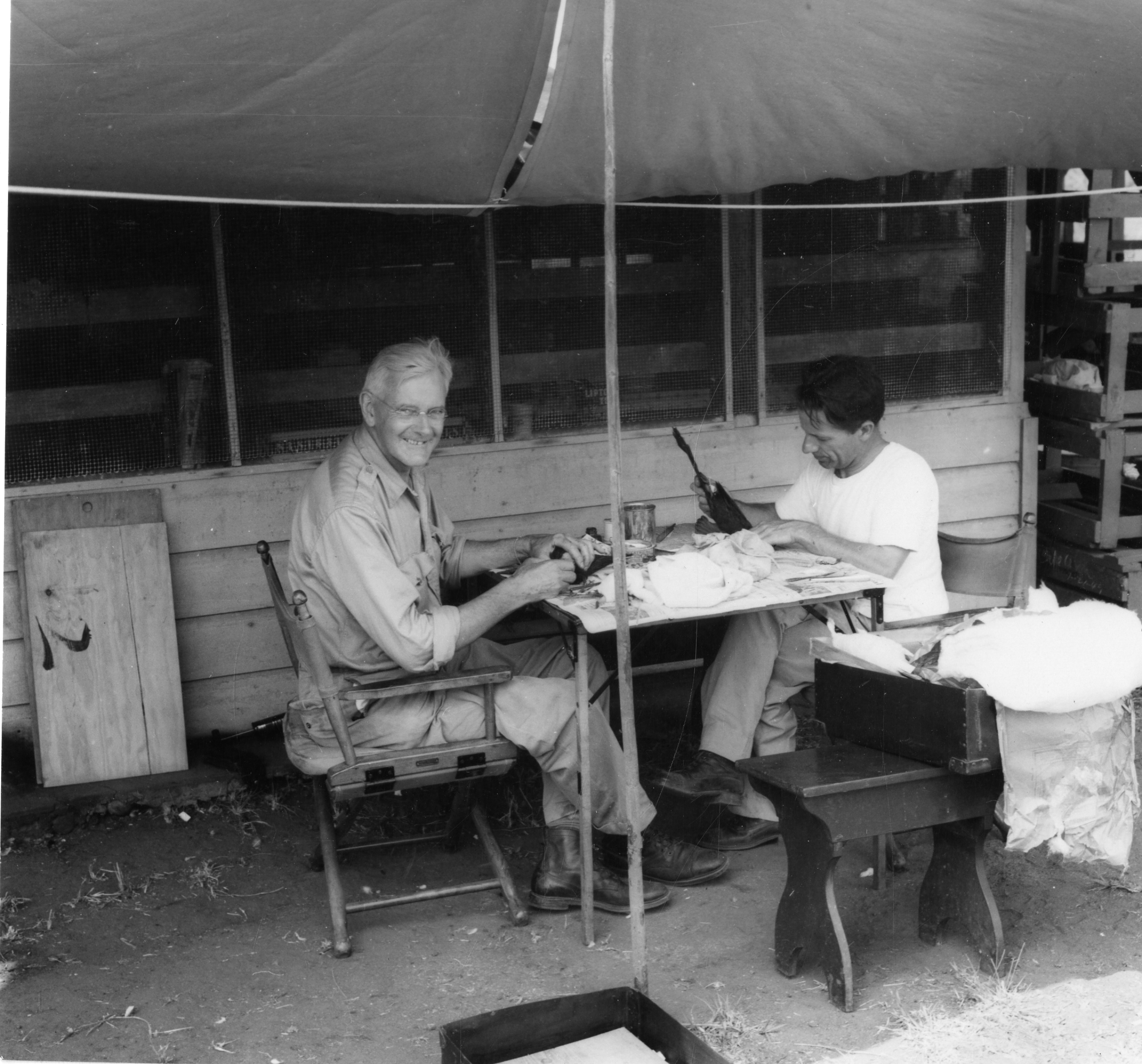 Smithsonian Secretary and ornithologist Alexander Wetmore and taxidermist Watson M. Perrygo preparin