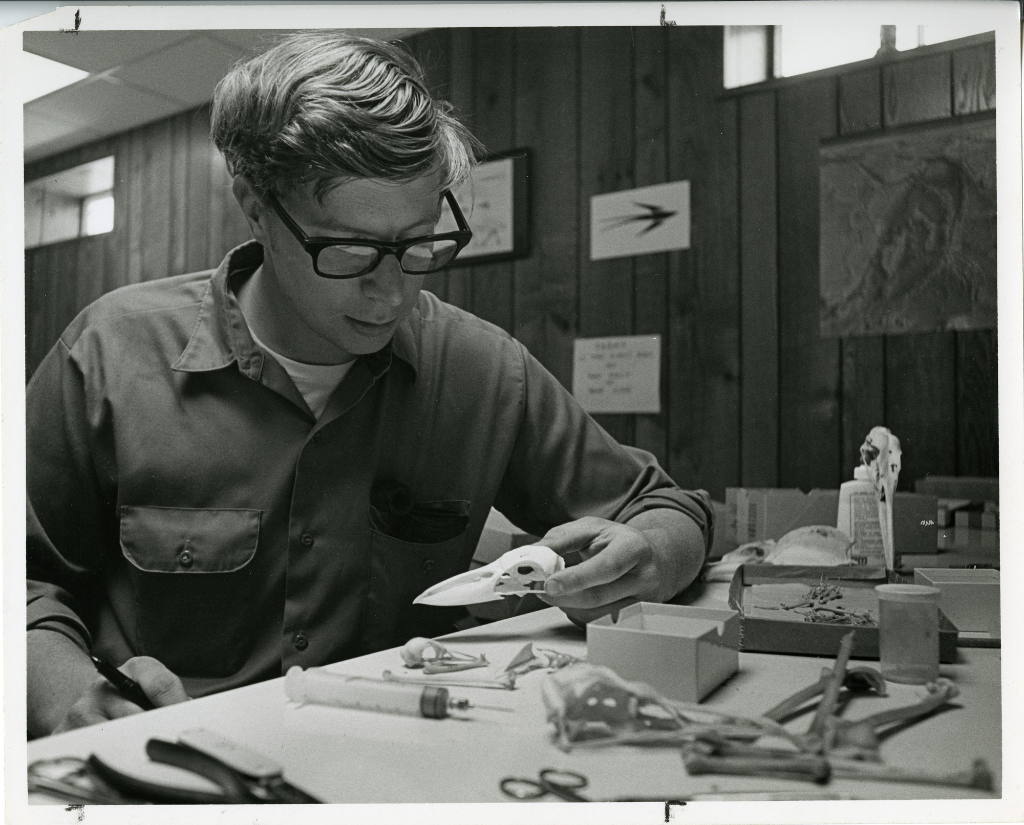 Storrs Olson, ornithologist with the Smithsonian Environmental Research Center, studying a bird skul