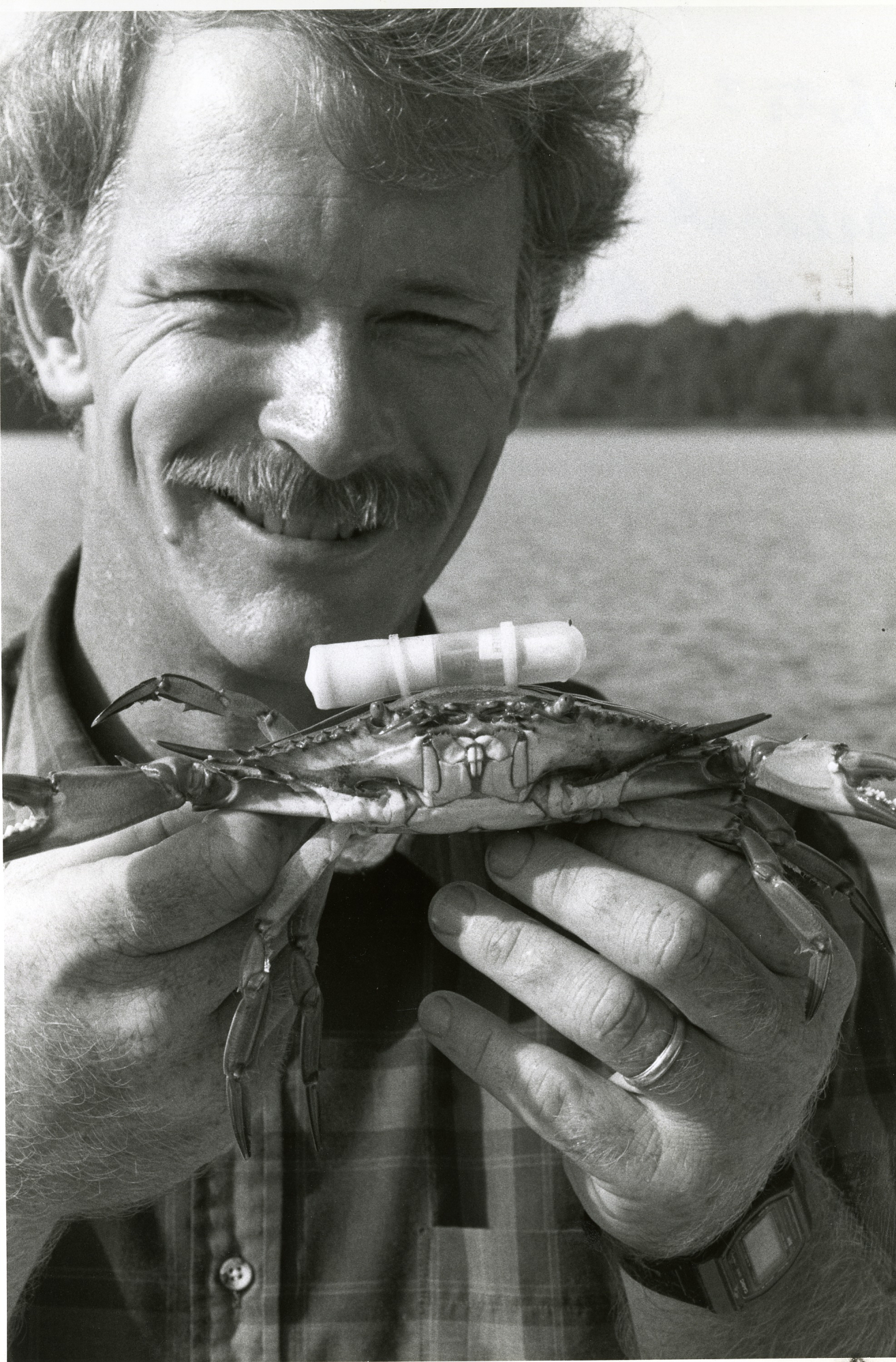 Anson Hines of the Smithsonian Environmental Research Center, holding a crab with a telemeter tracke