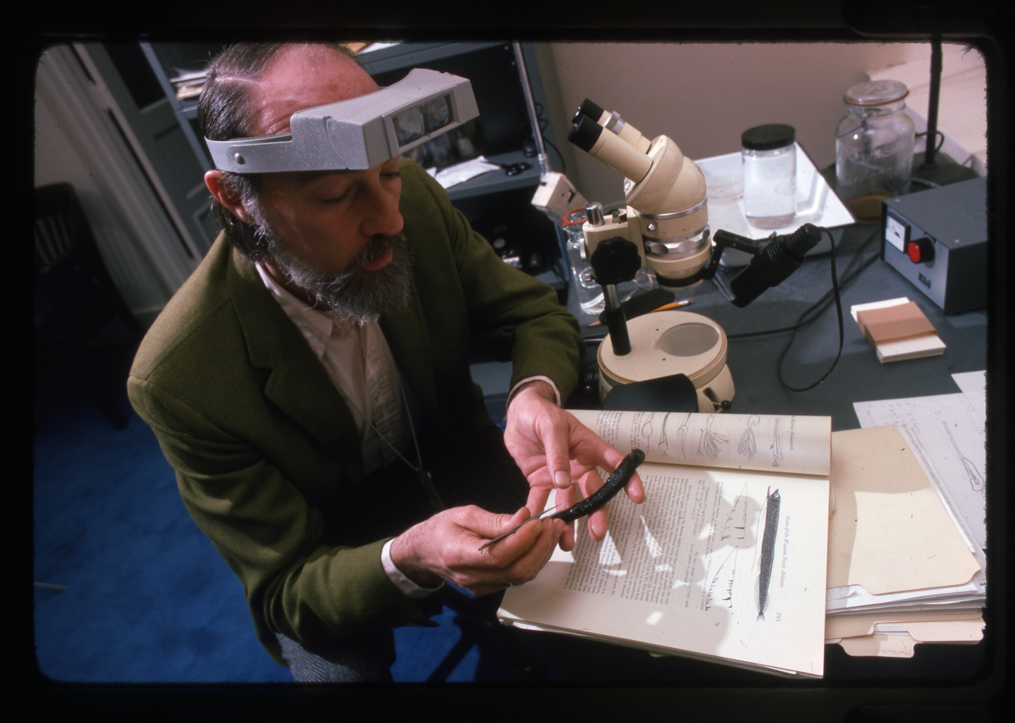 Ichthyologist Robert Gibbs, National Museum of Natural History curator, examining a fish, 1975.