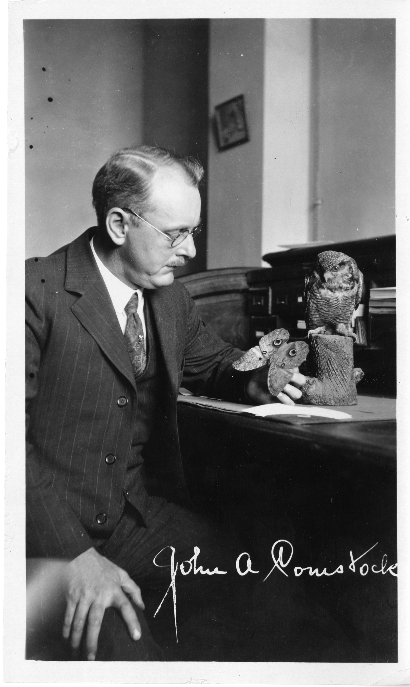 A man in a suit holds a butterfly and a figure of an owl perched on a stump is near him on the desk.