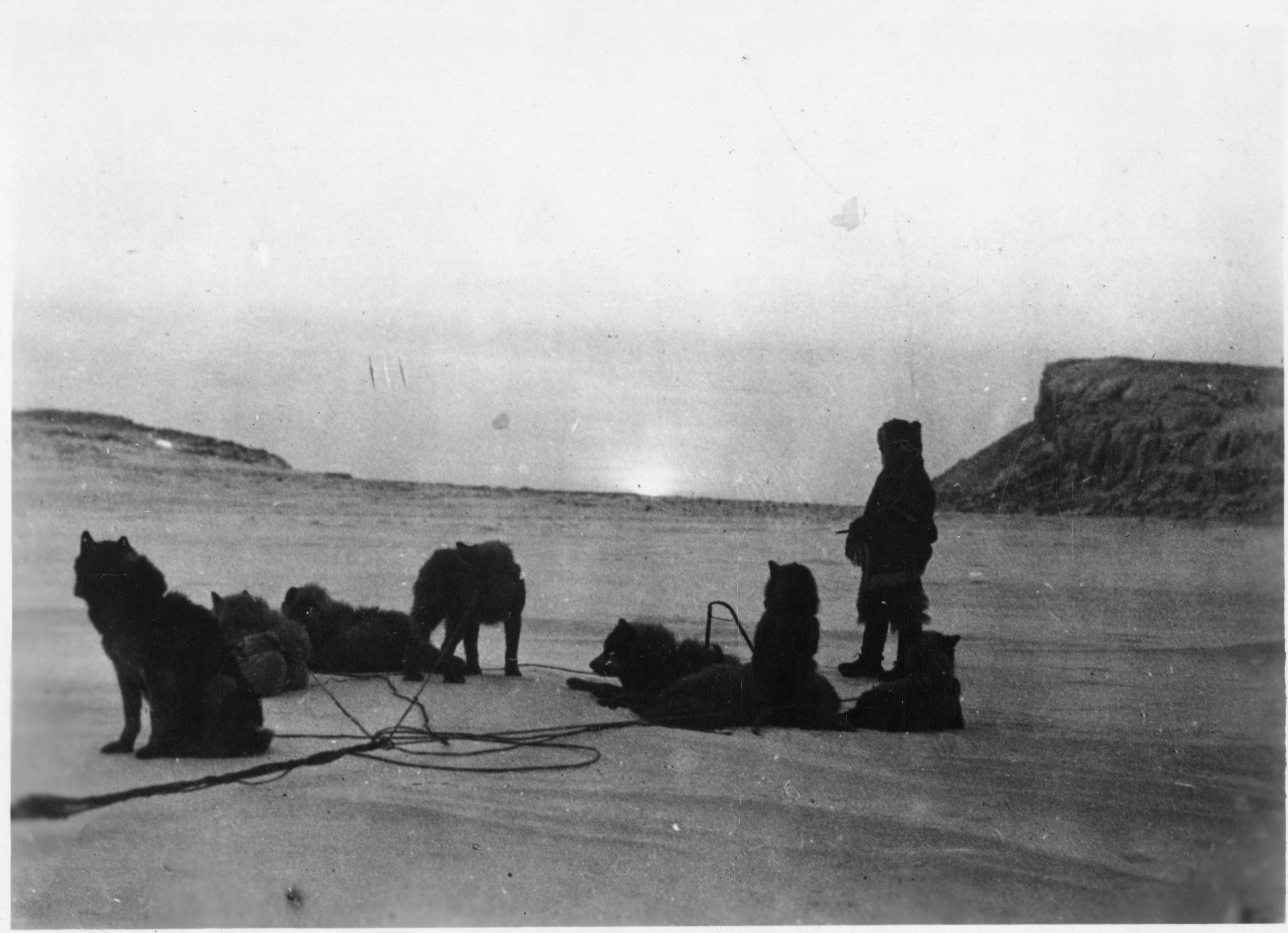 Black and white image of person with multiple dogs in artic enviroment.